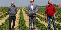 Co będzie w truskawkami? Plantatorzy błagają o pomoc