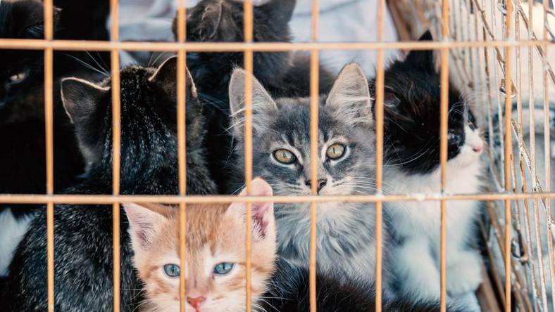 Kocięta w klatce