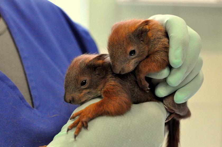 Małe wiewiórki uratowane!
