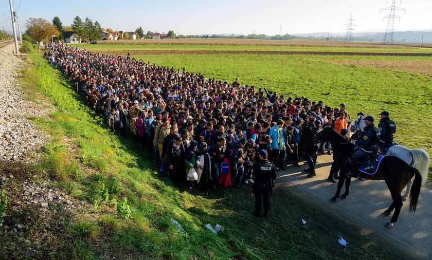 Jak zarobić na imigrantach?
