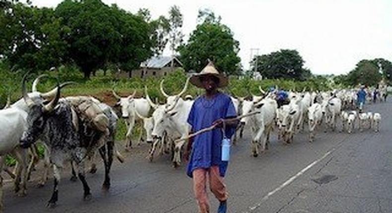 Cattle rustling: Police arraign 28-year-old alleged gang leader in Katsina