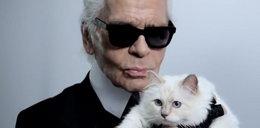 Kot Lagerfelda nakręcił wideo
