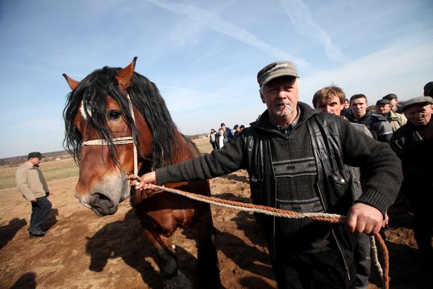 """""""Wstępy"""" (2011) - Jarmark Koński w Skaryszewie, 14 bm. Wstępy odbywają się tylko raz do roku, w pierwszy poniedziałek Wielkiego Postu. Jest to największy w Polsce jarmark koni pociągowych, roboczych fot.Tomasz Gzell PAP"""