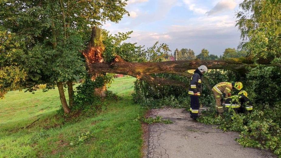 Wiatr łamał drzewa w powiecie bocheńskim