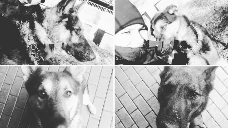Policyjne psy, które zginęły na warszawskiej Pradze-Północ