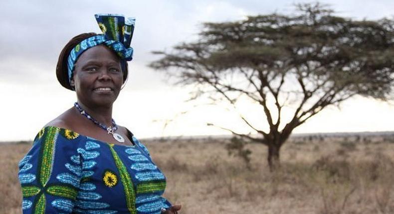 The late Professor Wangari Maathai, Nobel Laureate. Nakuru county will erect a statue at Nyayo Gardens in her honour