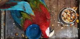Szokujące zdjęcia z łódzkiej papugarni. Aż trudno w to uwierzyć!