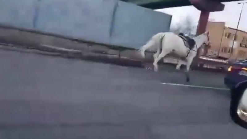 Koń galopował jedną z ulic Warszawy