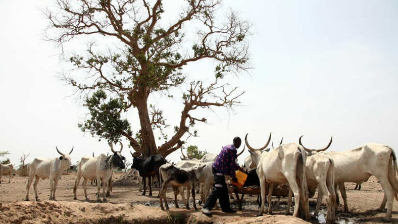 Miyetti Allah says herdsmen are willing to relocate to Sambisa forest.