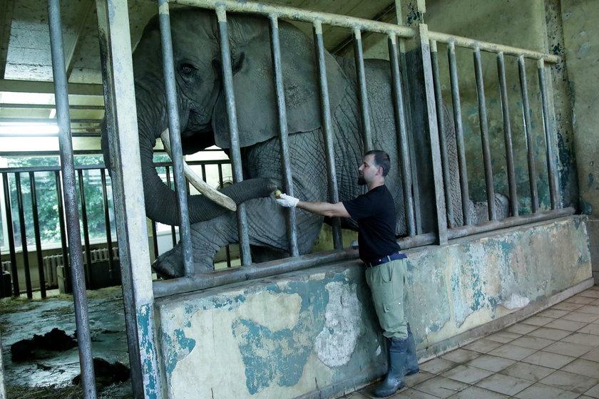 Słonie są bardzo inteligentne i...