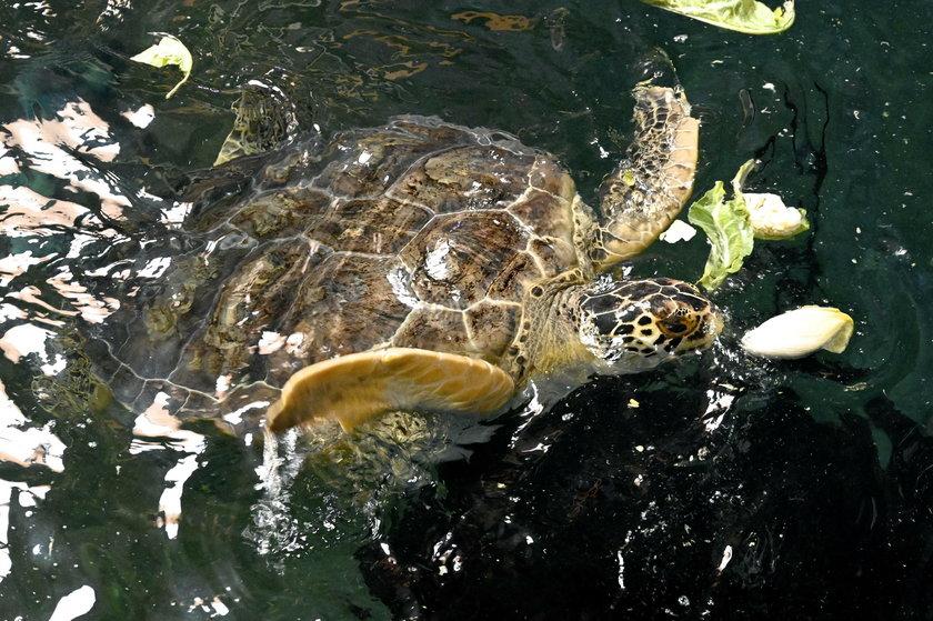 Żółw Stefan to Stefania