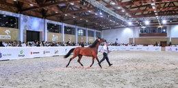 Wynik aukcji Pride of Poland. Sprzedano tylko sześć koni