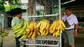 Turystyczna Jazda - Kostaryka - Egzotyczne owoce