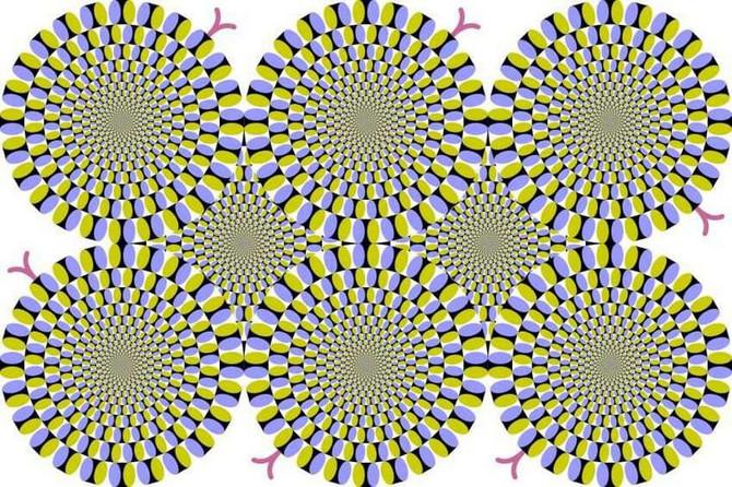 Šta tačno vidite na ovoj slici?