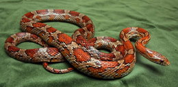W moim łóżku był wąż!