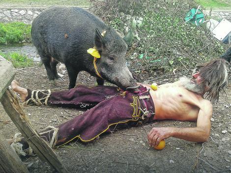 I divlju svinju je  pripitomio