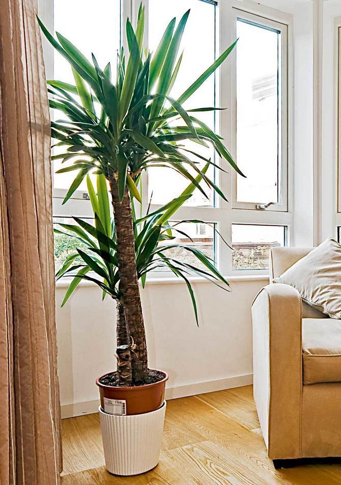 4 prakti ne sobne biljke - Plantas bonitas de interior ...