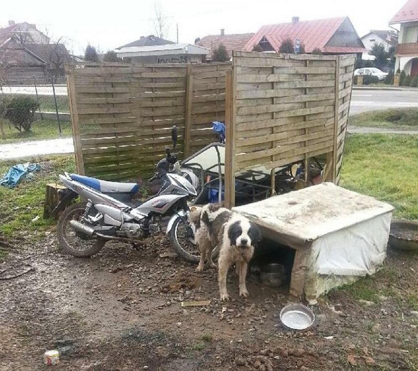 Dramat psów