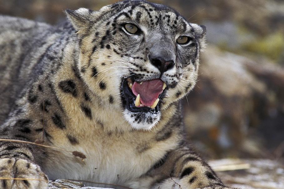 Góra Zagrożone gatunki zwierząt. Niedługo nie będziemy mogli już ich JM11
