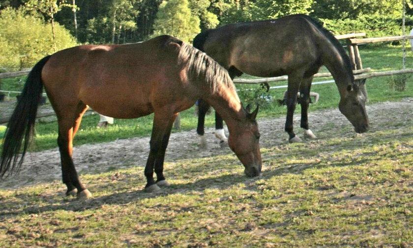Konie doskonale komunikują się