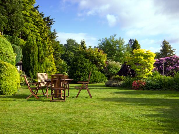 Ogród (Fot. ShutterStock)
