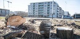 Miasto skontroluje wycinkę drzew