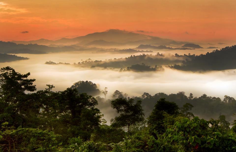 Dolina Danum, Malezja