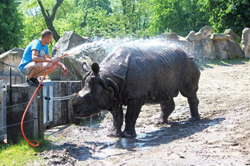 Kąpiel nosorożca