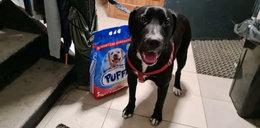 """Bezduszny właściciel porzucił psa. Przywiązał do go ławki, obok zostawił """"pakiet startowy"""""""