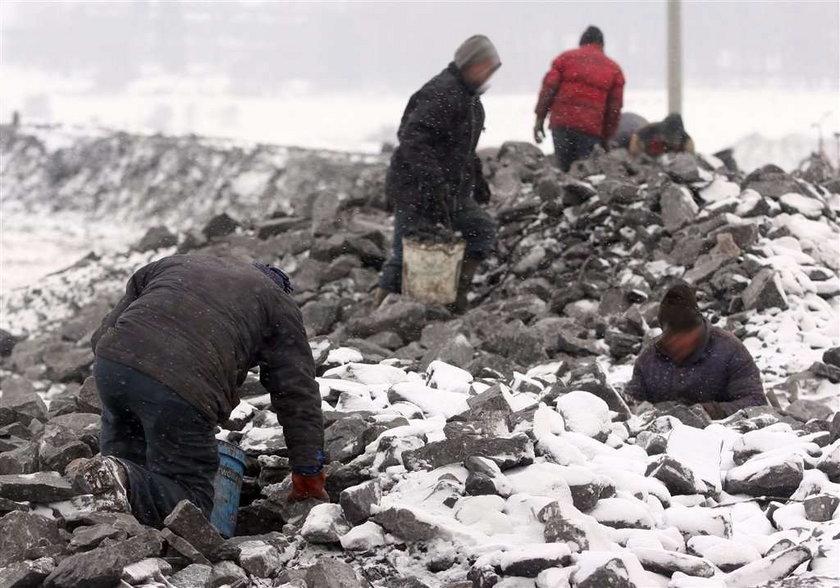 Ludzie grzebią za węglem, by przeżyć