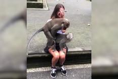 YT_majmuni_seks_krilo_zene_safe