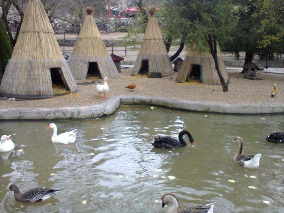 Zoooški vrt u Beogradu