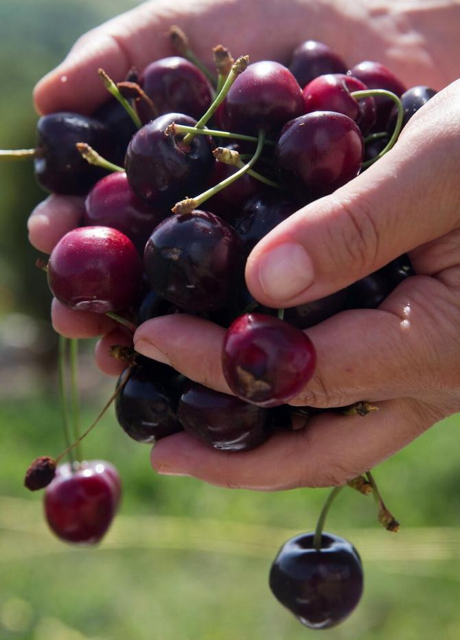 Evo zašto treba da jedete trešnje