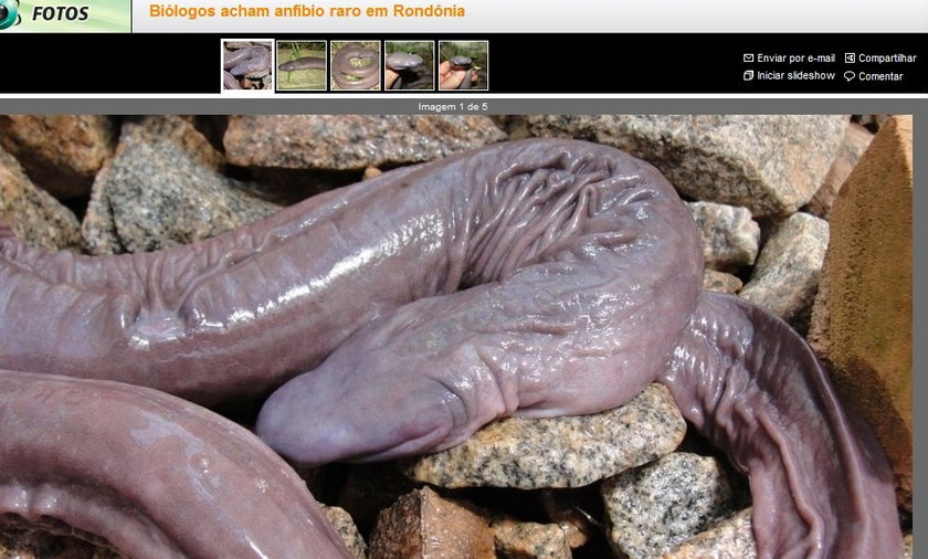 To nie penis, lecz...