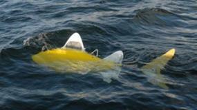 Mechaniczna ryba będzie wykrywać zanieczyszczenia