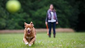 Od soboty wyższe kary za psa bez smyczy i kagańca. Ile może zapłacić opiekun?