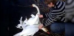 Na pomoc dzikim zwierzętom