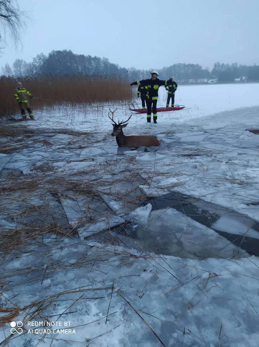 Strażacy najpierw wycieli w lodzie korytarze