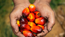 Here's the full story on this controversial ingredient, palm oil [Credit: National Geographic]