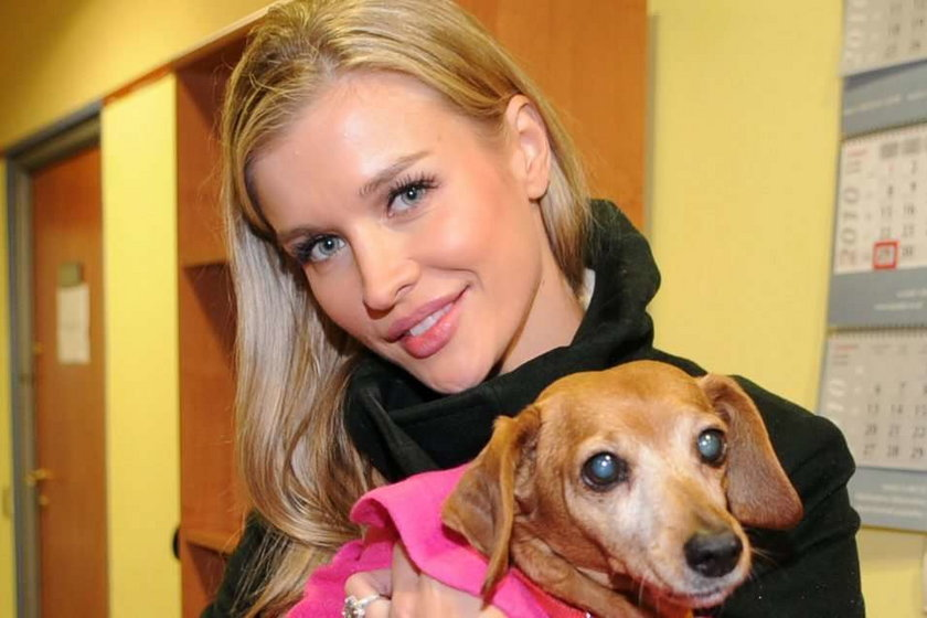 Krupa znajdzie dom dla bezpańskich psów