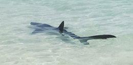 Rekin przy plaży na Majorce. Ewakuowano turystów
