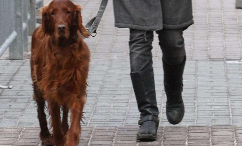 Polska gwiazda nie potrafi wyprowadzić psa jak należy!