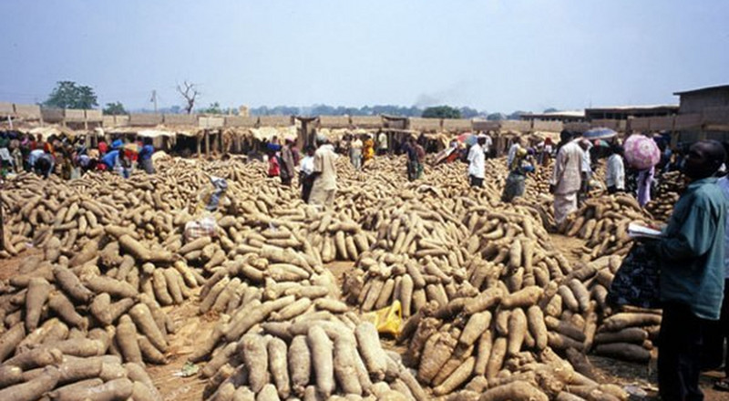 Nigeria is the highest producer of yam, thanks to these states