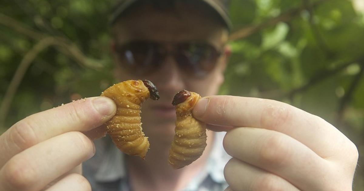 Darmowe filmy z robakami