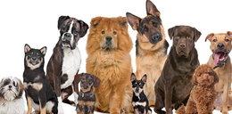 Gratka dla miłośników czworonogów! Wystawa psów rasowych w ten weekend