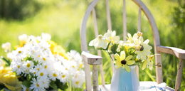Jak mieć tanio piękny ogród?