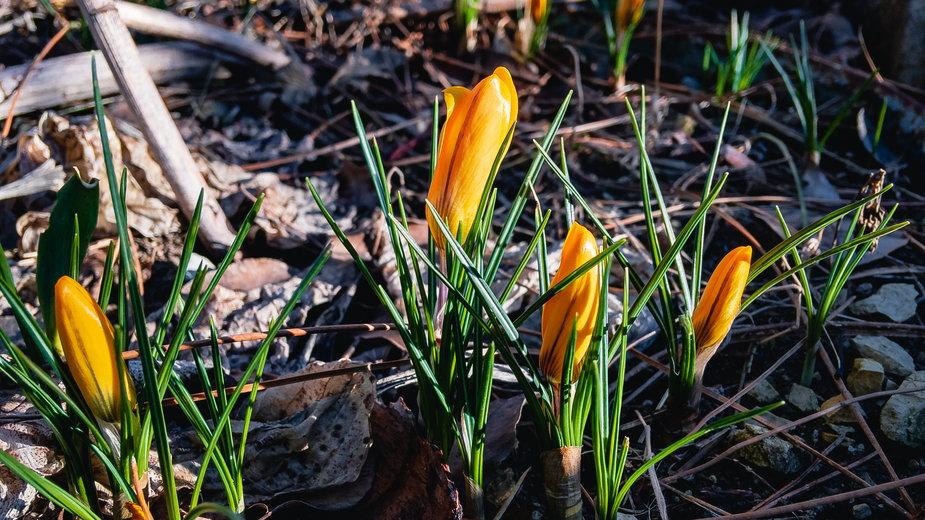 Ogród wczesną wiosną