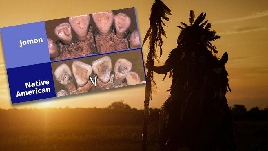 Porównanie zębów Jomon i rdzennych Amerykanów