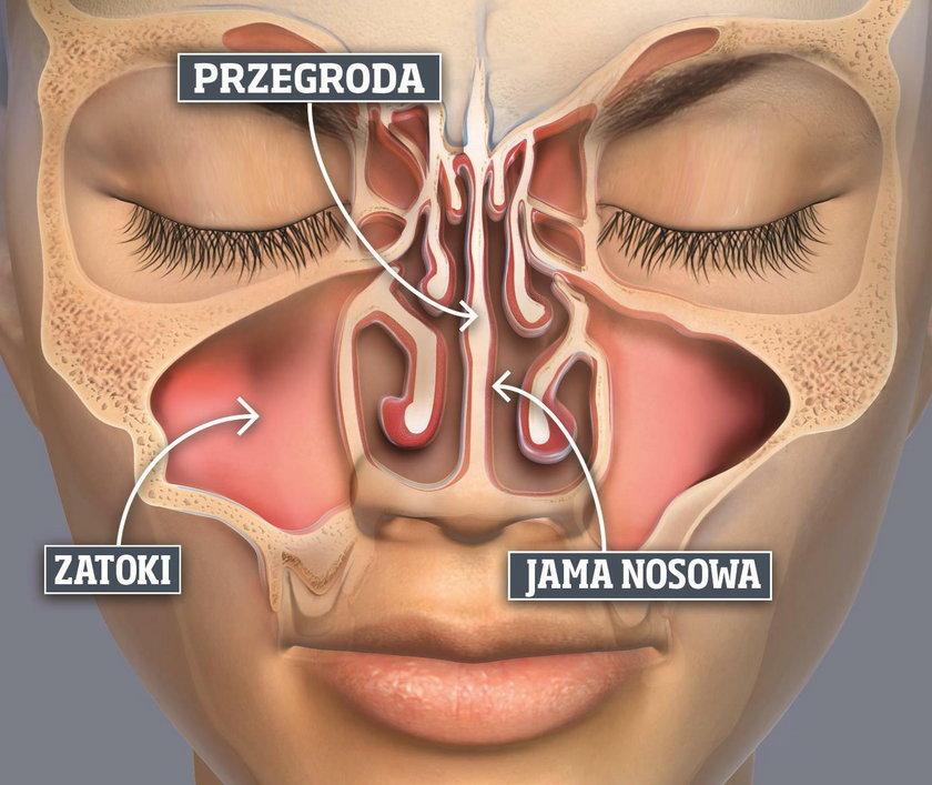 Jak działa nos?