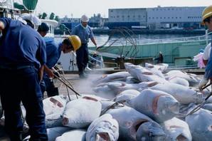 Prevozili su smrznutu ribu, a kada ih je policija zaustavila svi su ODMAH UHAPŠENI